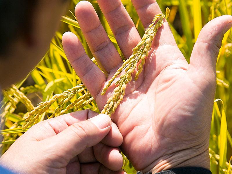 量より質、稲との対話